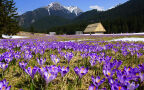 W poszukiwaniu wiosny w Tatrach