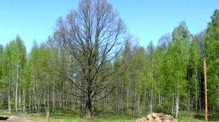 30 mln nowych sadzonek pojawi sięna terenie woj. lubuskiego