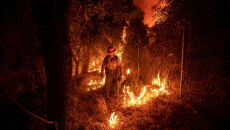 Pożary w Stanach Zjednoczonych (PAP/EPA/ETIENNE LAURENT)
