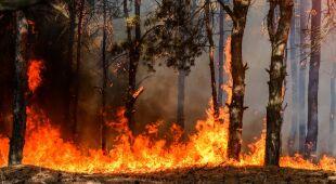W upalne dni leśnicy bacznie obserwują ryzyko pożarów