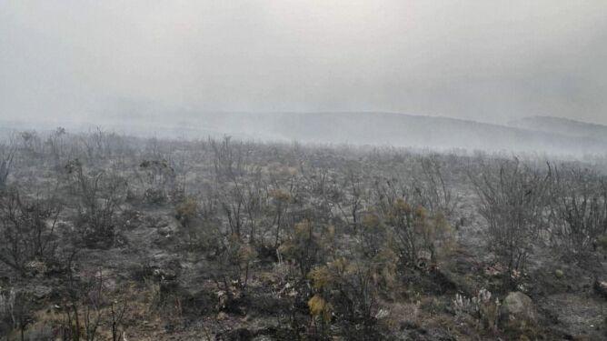 Pożar na zboczach Kilimandżaro