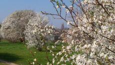 Wiosna w Bydgoszczy (Kontakt Meteo/FLASHBYDGOSZCZ)