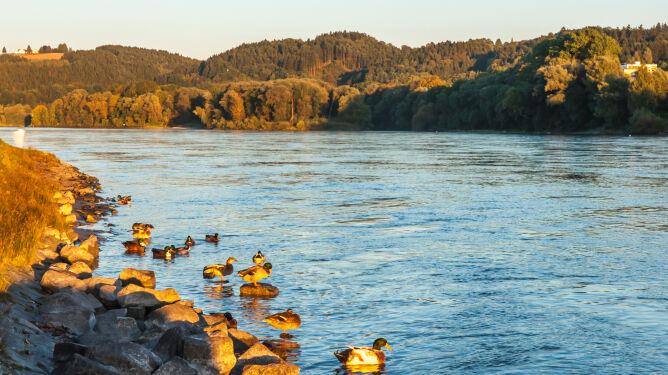 Rekordowo niski poziom wody w Dunaju