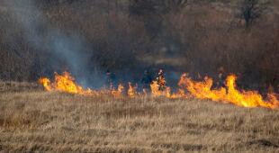 Zagrożenie pożarami w polskich lasach wzrasta