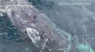 Bliskie spotkanie z wielorybem w Kalifornii